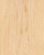 Oberflächen-Muster Furnier Ahorn
