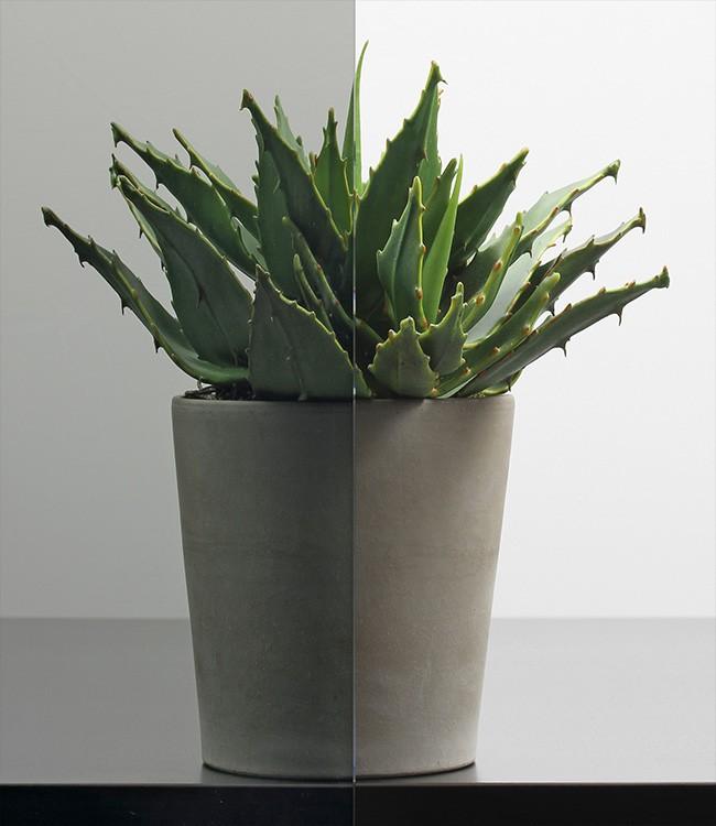 Parsol Grau Ornamentglas-Verglasung